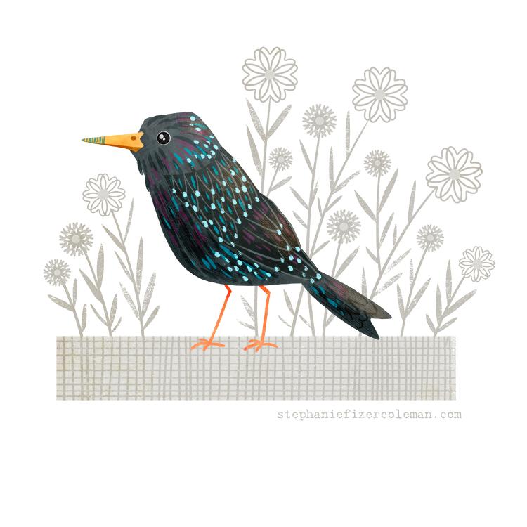 37 european starling.jpg