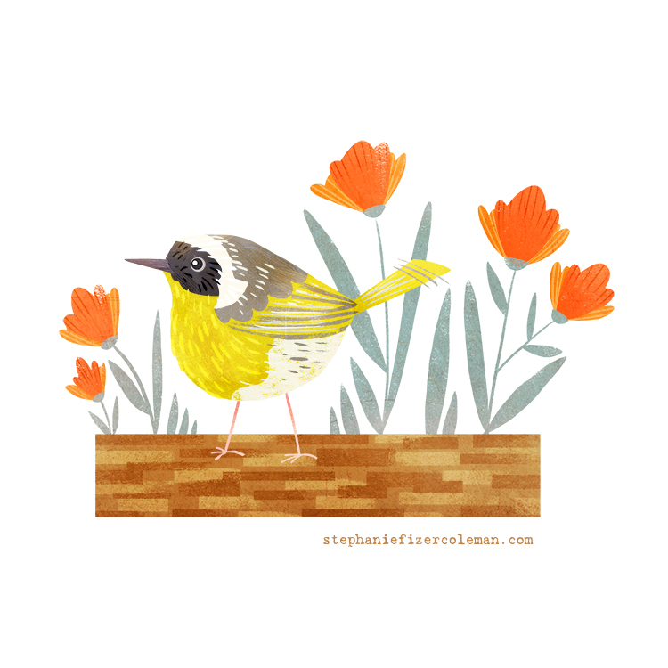 40 common yellow throat website.jpg