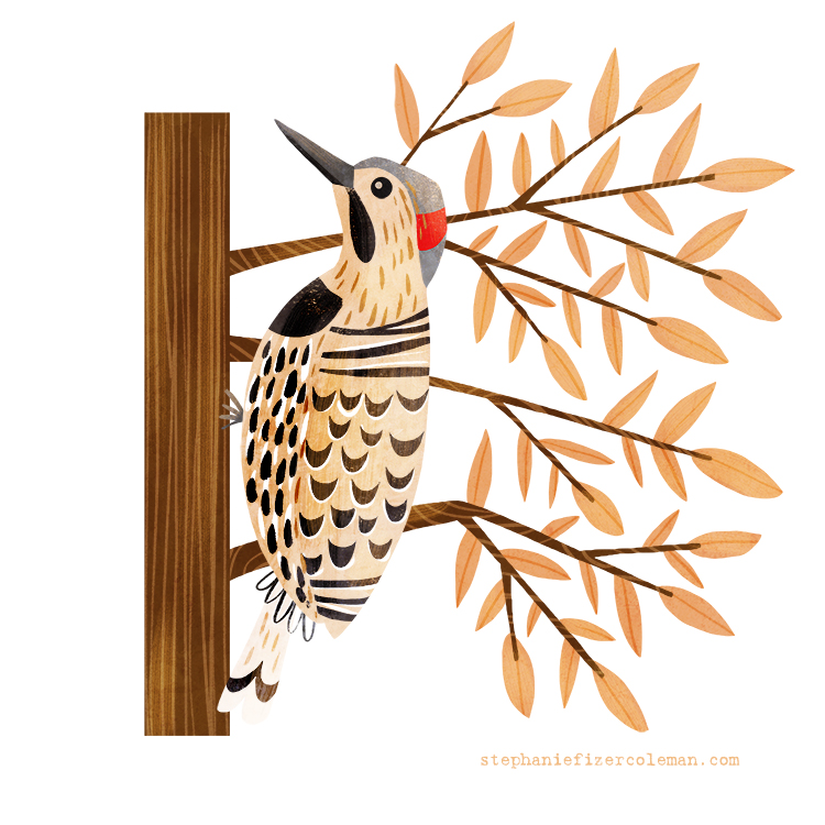 41 northern flicker.jpg