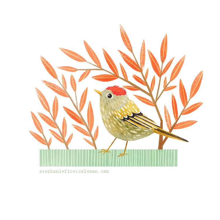 46 ruby crowned kinglet STEPHFIZERCOLEMAN.jpg