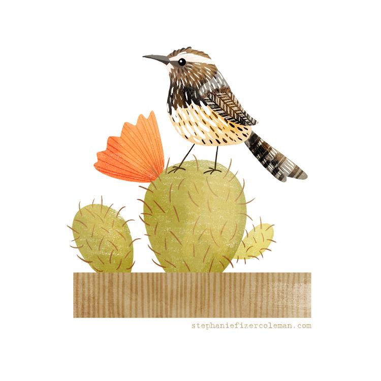 47 cactus wren.jpg