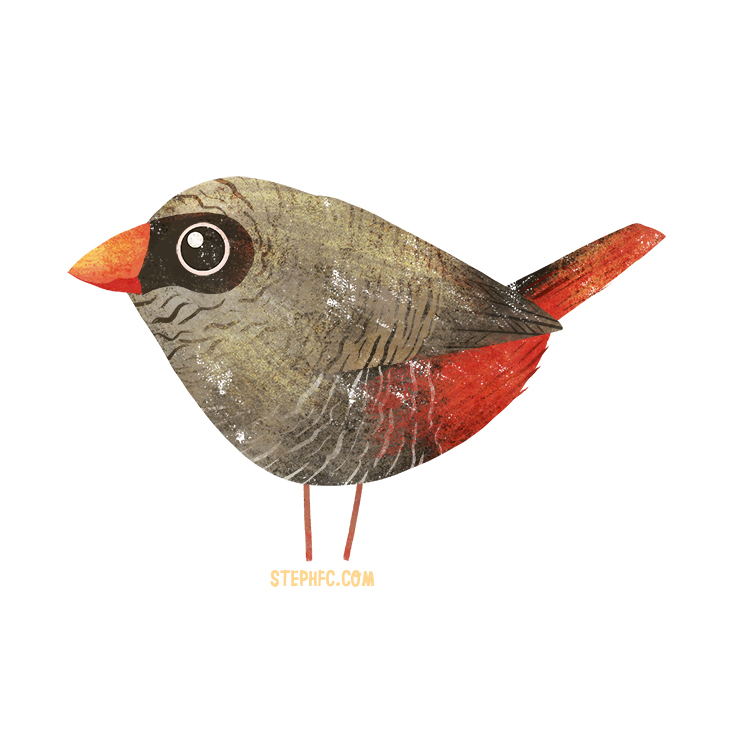 beautiful firetail finch.jpg