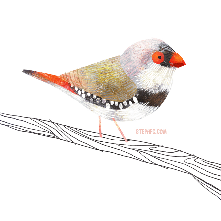 diamond firetail.jpg