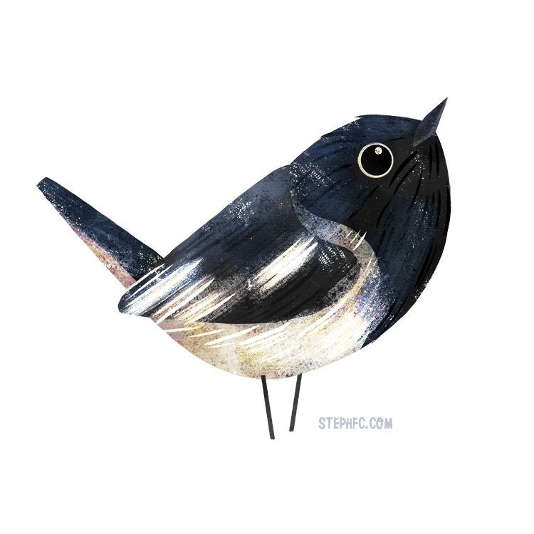 hooded robin.jpg