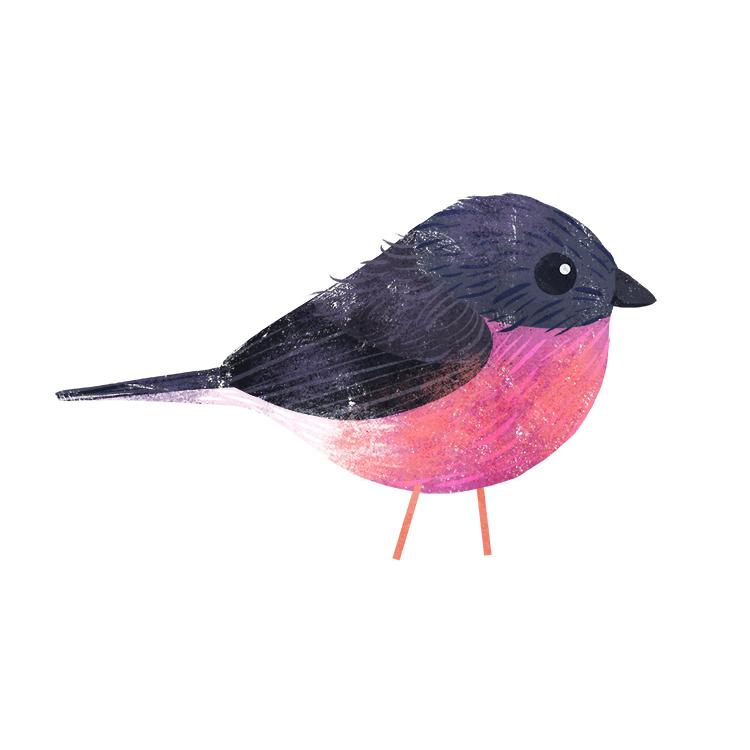 pink robin.jpg