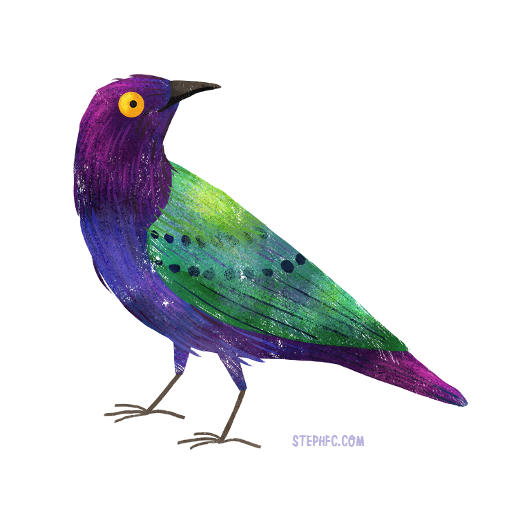 purple glossy starling.jpg
