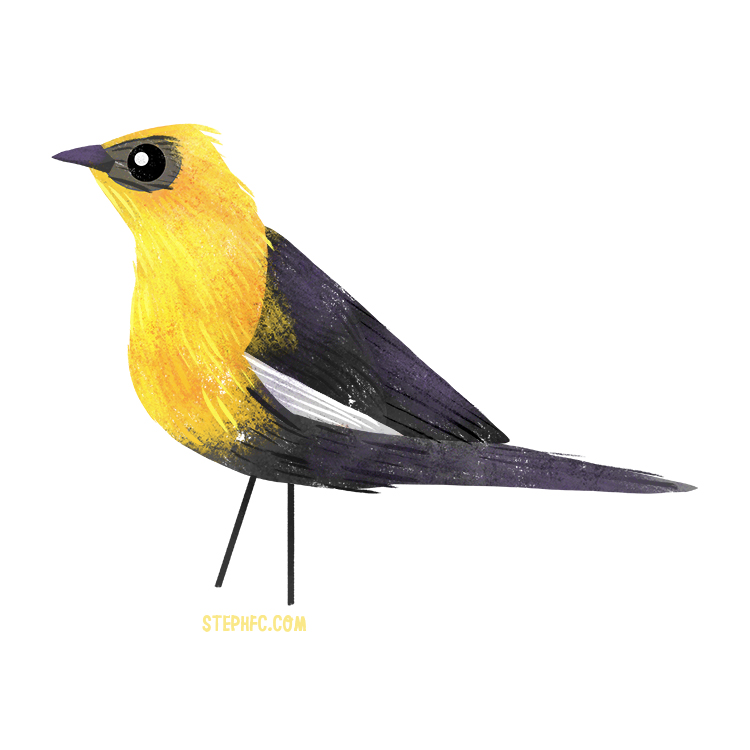 yellow headed blackbird.jpg