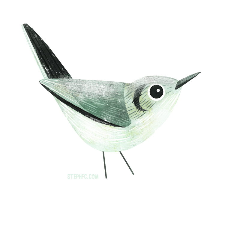 cuban gnatcatcher.jpg