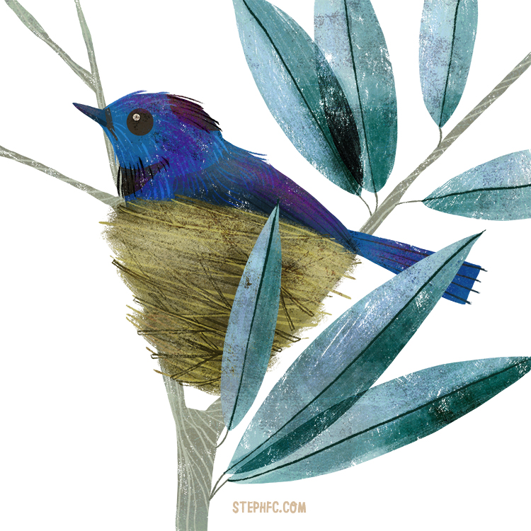 black naped blue monarch.jpg