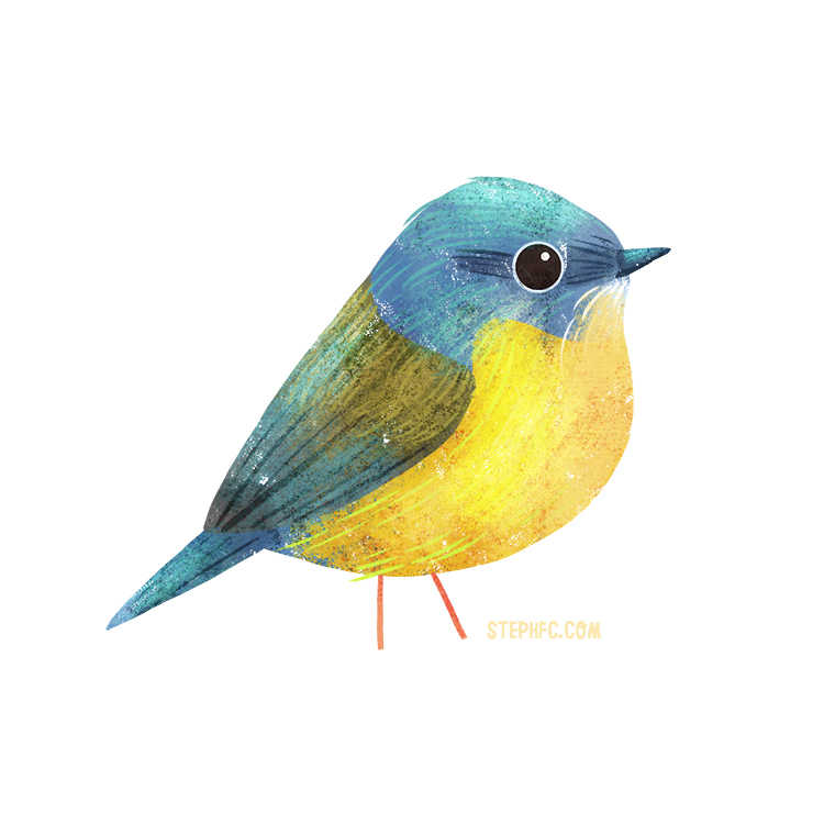 eastern yellow robin.jpg