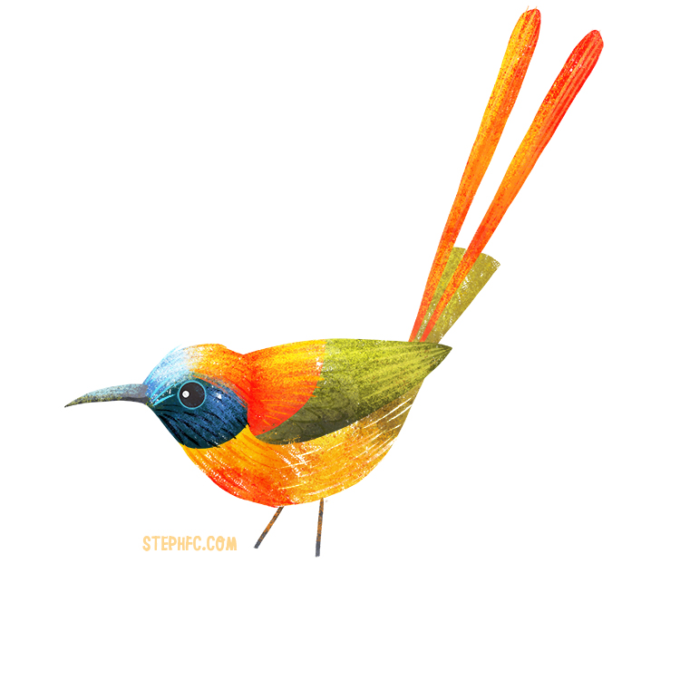 fire tailed sunbird.jpg