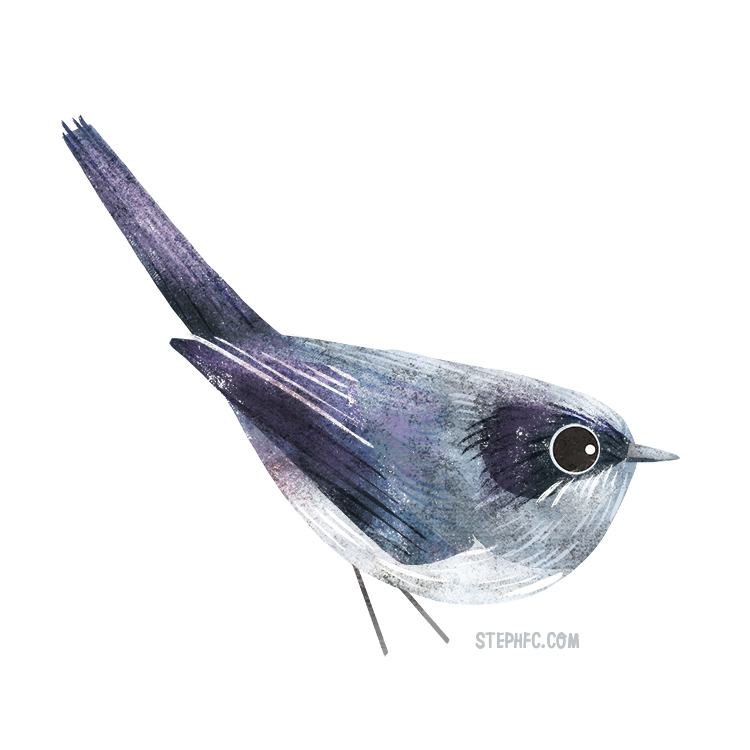 masked gnatcatcher.jpg