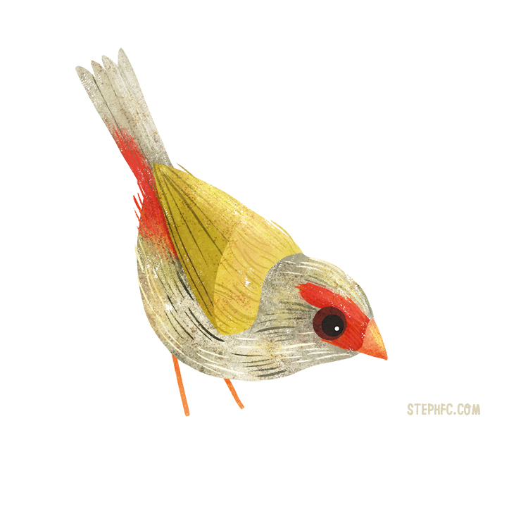 red browed finch.jpg
