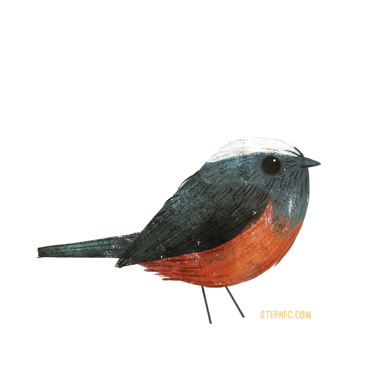 white capped redstart.jpg