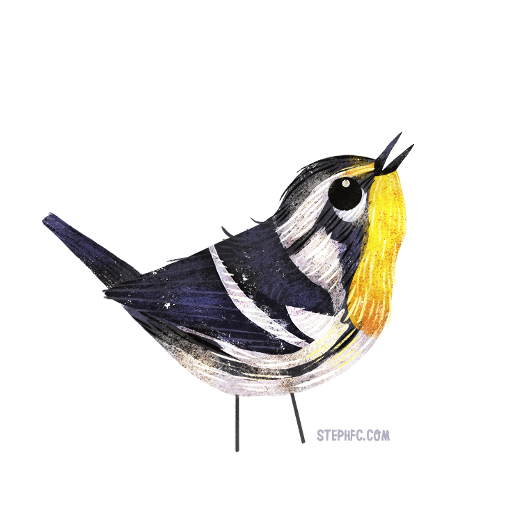 yellow throated warbler.jpg