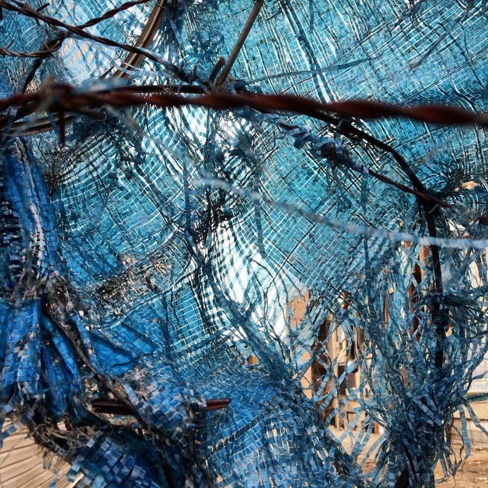 Kate Wichlinski Blue