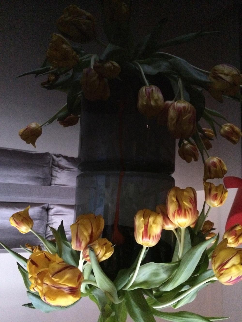 Kate Wichlinski Tulips