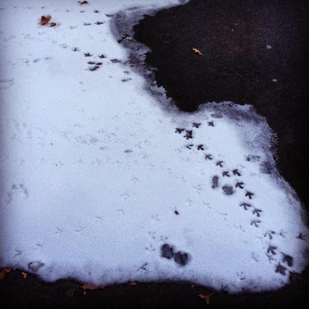 Kate Wichlinski Snowprints