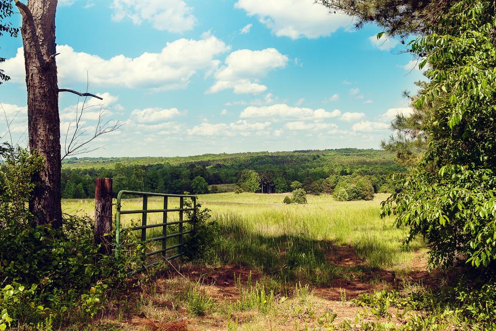 ©Jennifer Bailey 2013 North Carolina