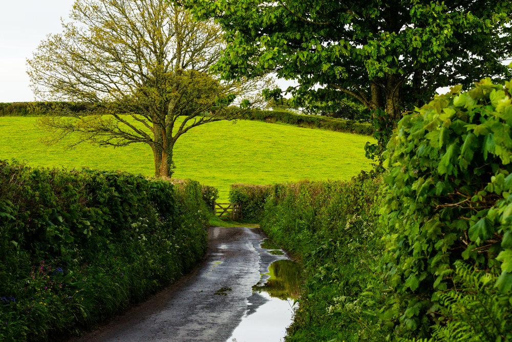 devon countryside little lane