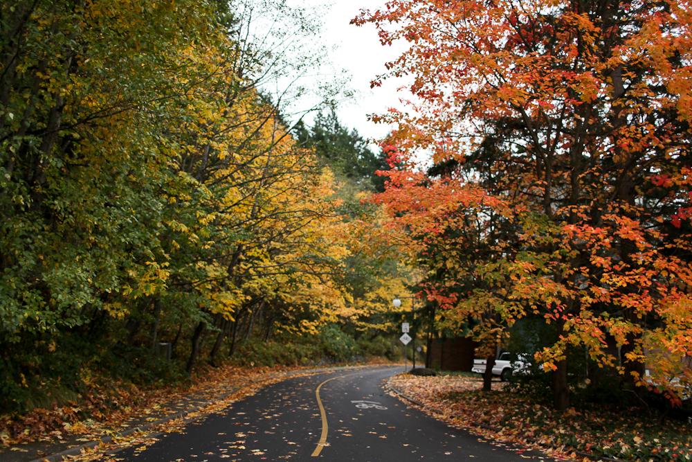 fall-2-2.jpg