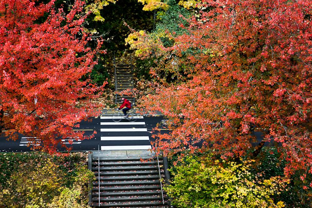 fall-15.jpg
