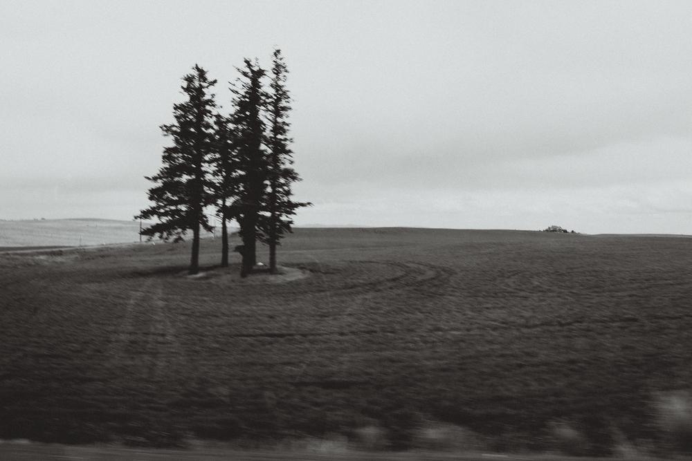 Outside Reardan, Washington.