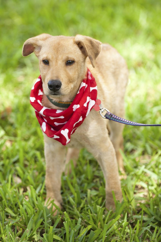 Puppy raising socialization dog training picture