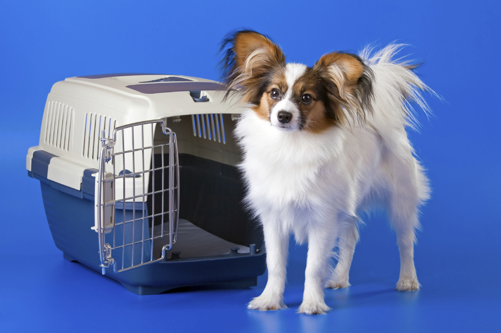 Dog with crate
