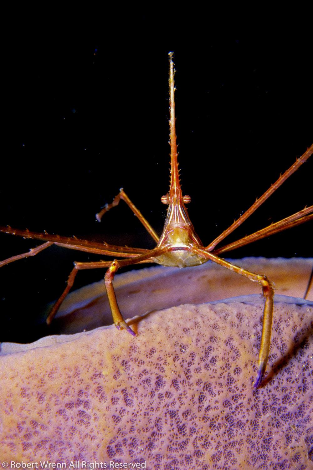 20060312-CrabArrow2.tif.jpg