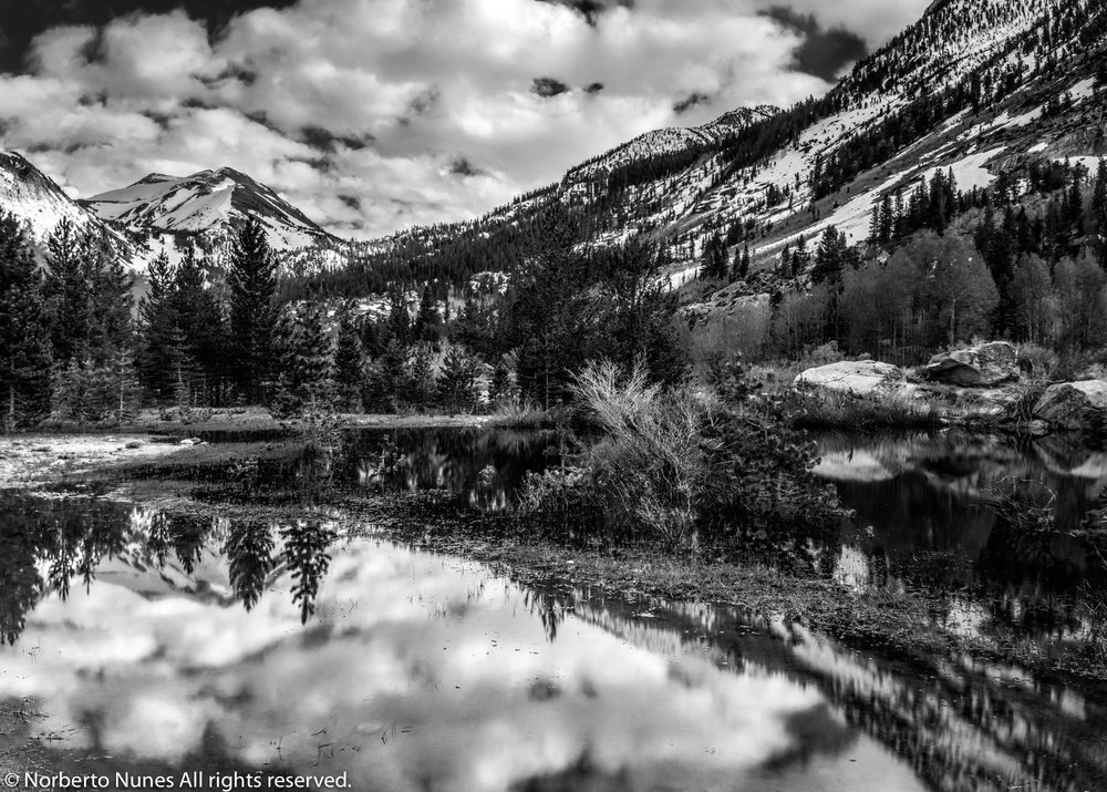 DSC_0550 (Corrected) (Puddle Reflection HDR Final B_W)BPC Gallery.jpg