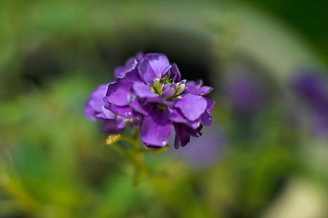 Flowers_071506_009_.jpg