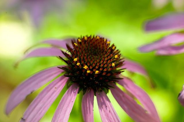 Flowers_071506_022_.jpg