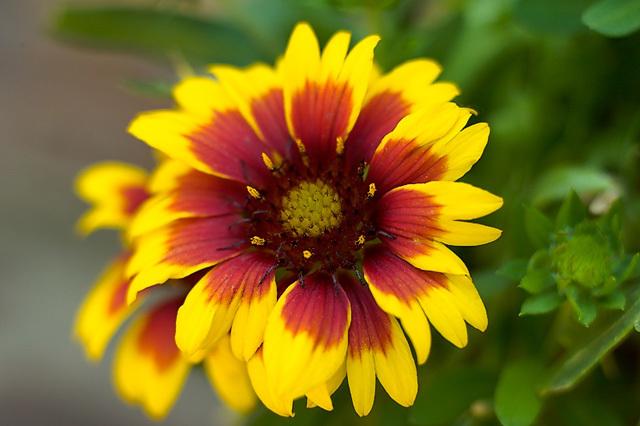 Flowers_071506_032_.jpg