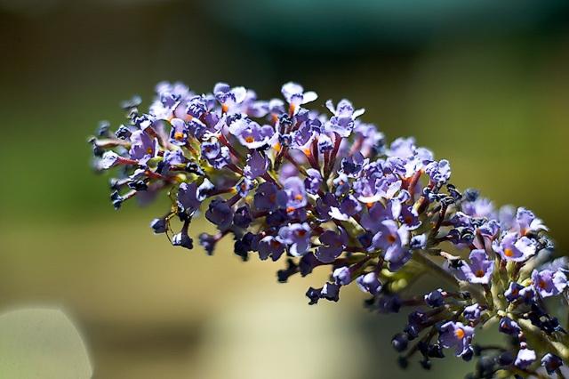 Flowers_071506_044_.jpg
