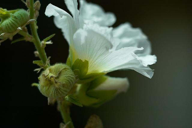 Flowers_071606_026_.jpg