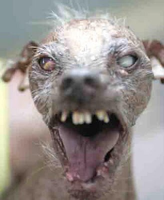 This is what dogs look like to some people. This is no joke. It's not their fault. We dog owners have to respect and work around this fact of life.