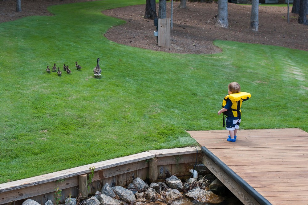 """Why do they keep running away from me? Oh well, bye-bye ducks!"""