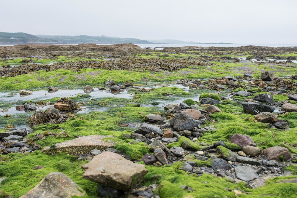 When we arrived at St. Michael's Mount, the tide was out and so we could walk across to the island.   Four hours after this photo was taken, all of the moss and rocks were back under several feet of the English Channel.