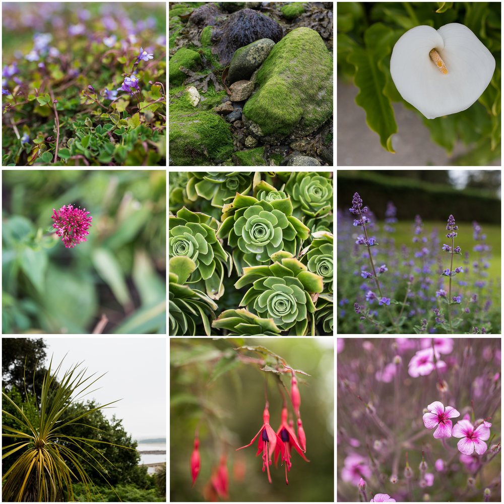 The variety of flora across the island was unexpected.  Who knew so many tropical-looking plants grew in Western England?