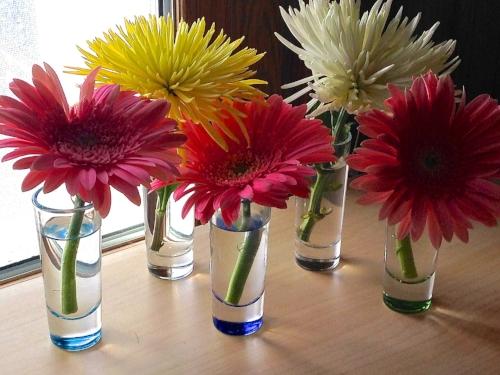 Gerber daisies and mums.