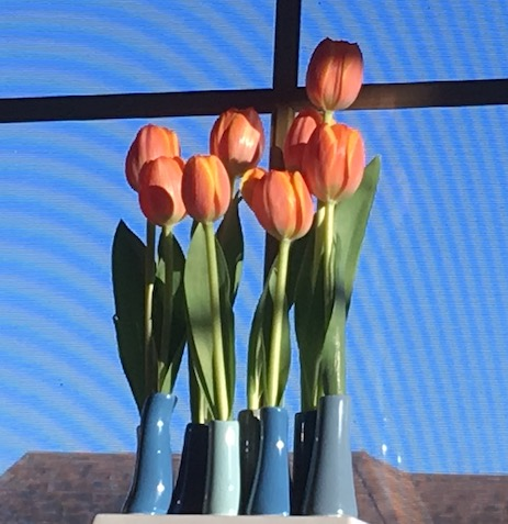 Here's my vase filled with pale orange tulips. It's perched on the window sill next to my computer.