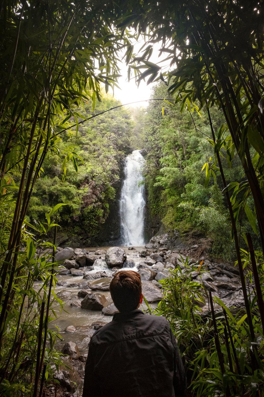 DSCF2578_Bamboo Forest.jpg