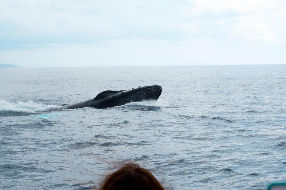 DSCF2413_Whale Watch.jpg