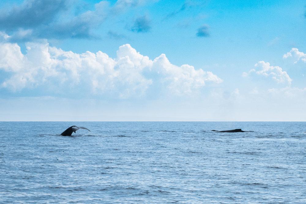 DSCF2468_Whale Watch.jpg