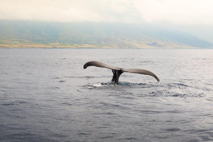 DSCF2448_Whale+Watch.jpg