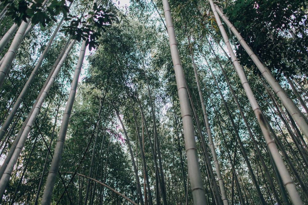 002-Arashiyama.jpg
