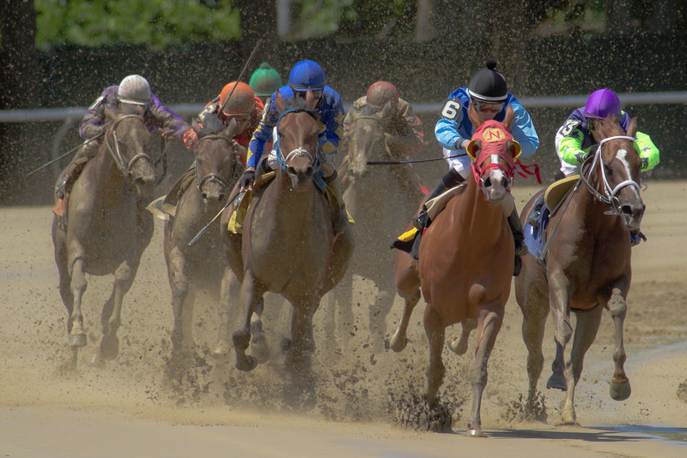Top of the stretch during a race at Belmont park on June 23rd.