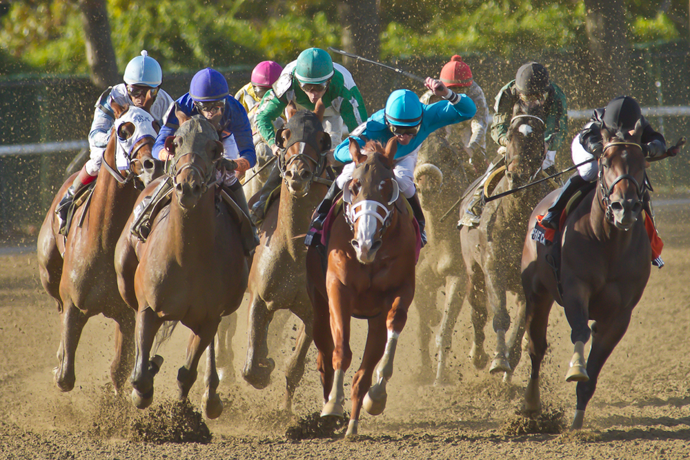 Race Six: The Hudson Stakes at Belmont Park