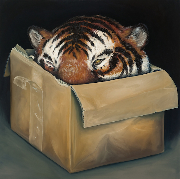 Tiger Head, In a Box